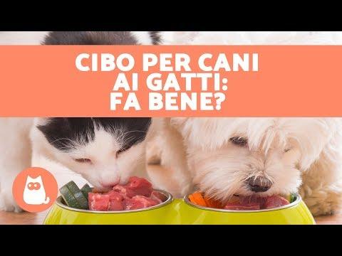 Si può dare il cibo per cani ai gatti?