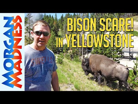 Buffalo Attacks Boys Posing for a Picture in Yellowstone | Morgan Madness