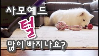 This is what happens when a samoyed owner doesn't vacuum for 24 hours l 사모예드 집사가 24시간 청소를 안하면 생기는 일