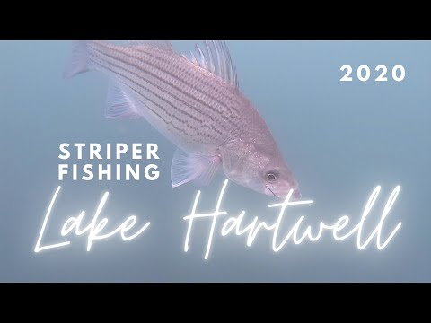 Striper Fishing On Lake Hartwell 2020