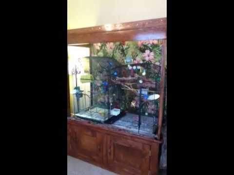 HomeMade Bird Cage Hutch  YouTube