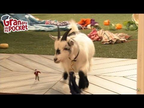 Grandpa in My Pocket - Mr Scoffbucket the Goat | Series 2
