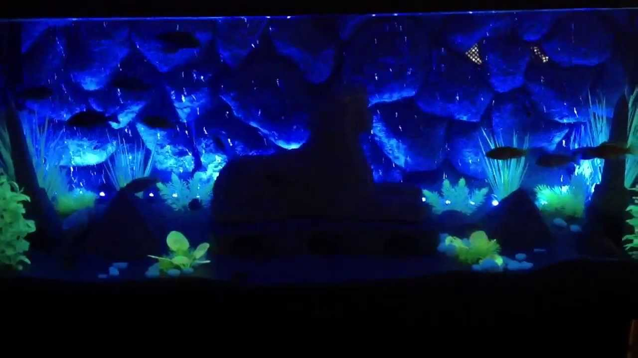 Fish Black Light Uv Amp Led Bubblewand Avatar Youtube
