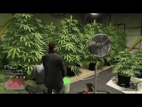 DOING A GROW on GTA Online.  Owning a weed farm and dealing bud