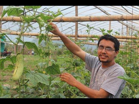 Nepali Youth in Vegetable Farming, Kaski/ तरकारी खेतीमा युवा