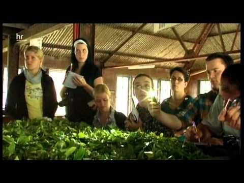 Die Teemeister Vom Main - Ronnefeldt Tea Academy