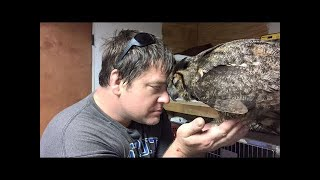 Watch what this OWL did to its rescuer as a token of gratitude! Incredible!