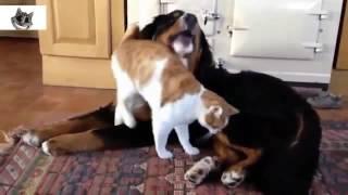 terharuu!!! persahabatan Kucing dan anjing