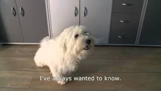 Dog Interpretation Services