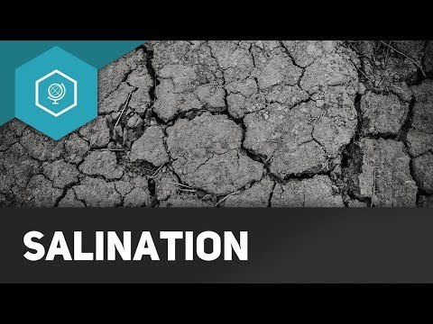Salinisation of Soils | Geography ● simpleclub US