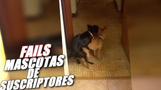LOS MAYORES FAILS DE MASCOTAS DE SUSCRIPTORES