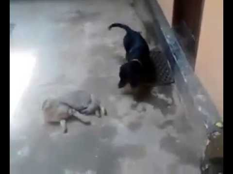 dog vs cat fighting funny video from kerala