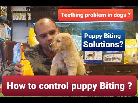 How to Control /Train your Puppy to stop Biting ? Baadal Bhandaari Pathankot Punjab 9878474748