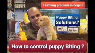 How to Control /Train your Puppy to stop Biting? | By Baadal Bhandaari | Pathankot Punjab 9878474748