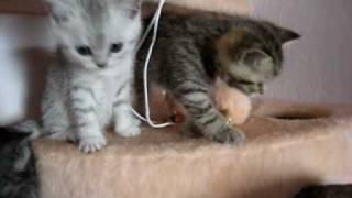Эти смешные кошки - Веселая семейка.mpg