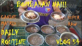 FEEDING TIME  BOMBAHAN NA!!! DAILY ROUTINE AMERICAN BULLY DOGS| DON RAIDER VLOG 54
