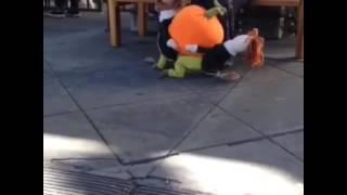 Собака несет тыкву