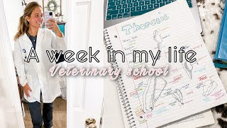 MY FIRST WEEK IN VETERINARY SCHOOL // study methods & handling online school