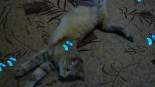 Милота! / Really cute!