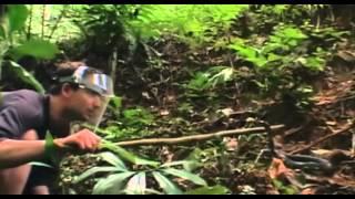 Un monde mortel - les serpents