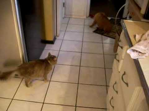 My Cat Hates My New Puppy! - YouTube