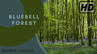 1 Hour Nature Sounds Relaxation Meditation-Birdsong-Natural Sound of the Forest Birds Singing