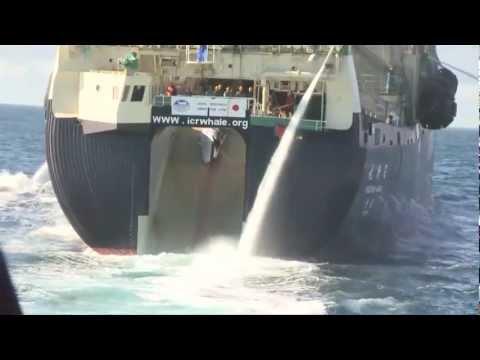 Bob Barker Encounter with Yushin Maru 2 Transfers Poached Whale to Nisshin Maru