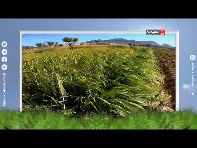 من زرع حصد | أنواع المحاصيل الزراعية متحملة الملوحة | الحلقة 14 | قناة الهوية