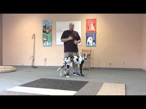 How to Use an Electric Collar to Train a Dog to Come When called