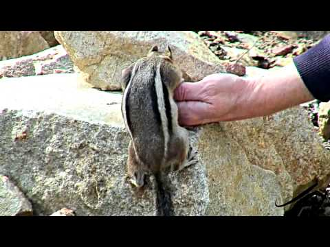 squirrels-up-close---cutest-of-the-cute-youtube-videos-hd