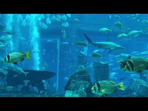 Atlantis Resort Aquarium, Dubai