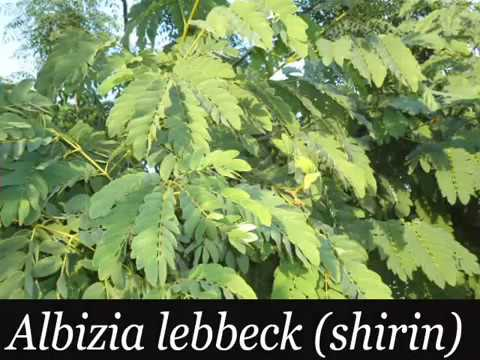FEW PLANTS OF KAMOKE FLORA PART 3