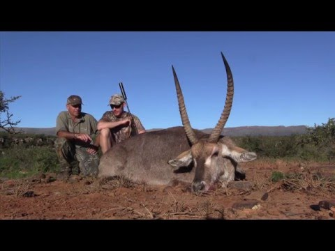 Waterbuck Hunt with Leopards Valley Safaris