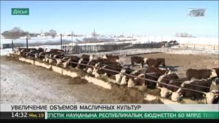 Объем валовой продукции сельского хозяйства РК в 2015 году увеличился(, 2016-02-19T08:53:30.000Z)