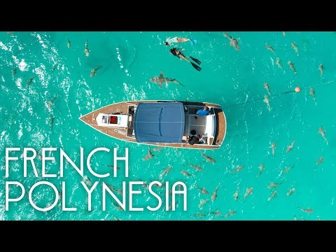 Swimming with Sharks in French Polynesia