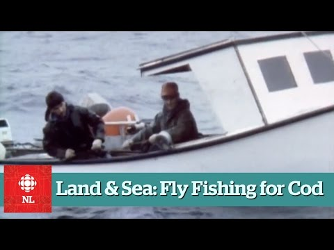 Land & Sea: Fly fishing for cod in Portugal Cove South