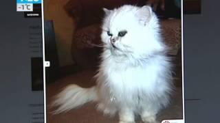 Секрет долголетия самой старой кошки России