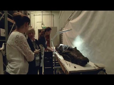 Conservation of a crocodile mummy Ancient Egypt ● Ancient History Documentary