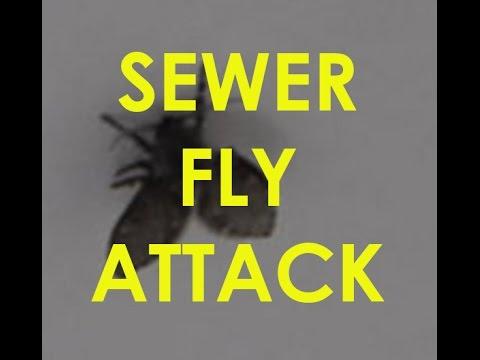 Sewer Flies