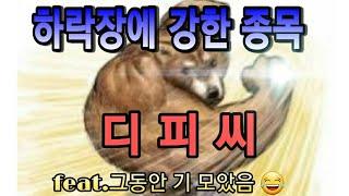 디피씨 본격 상승?상한가 성공 한강뷰티비:)예스24/한…