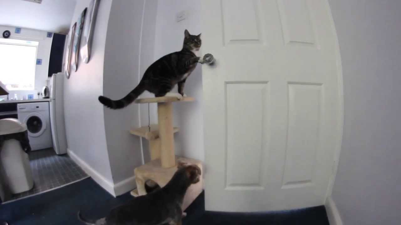 Cat Video Opening Door For Other Cats