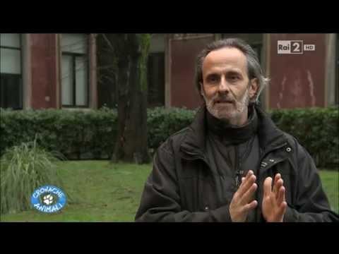 Cronache A  Medical Detection Dogs Italia