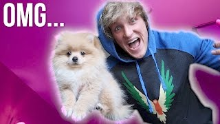 I JUST BOUGHT A PUPPY! **not clickbait** thumbnail