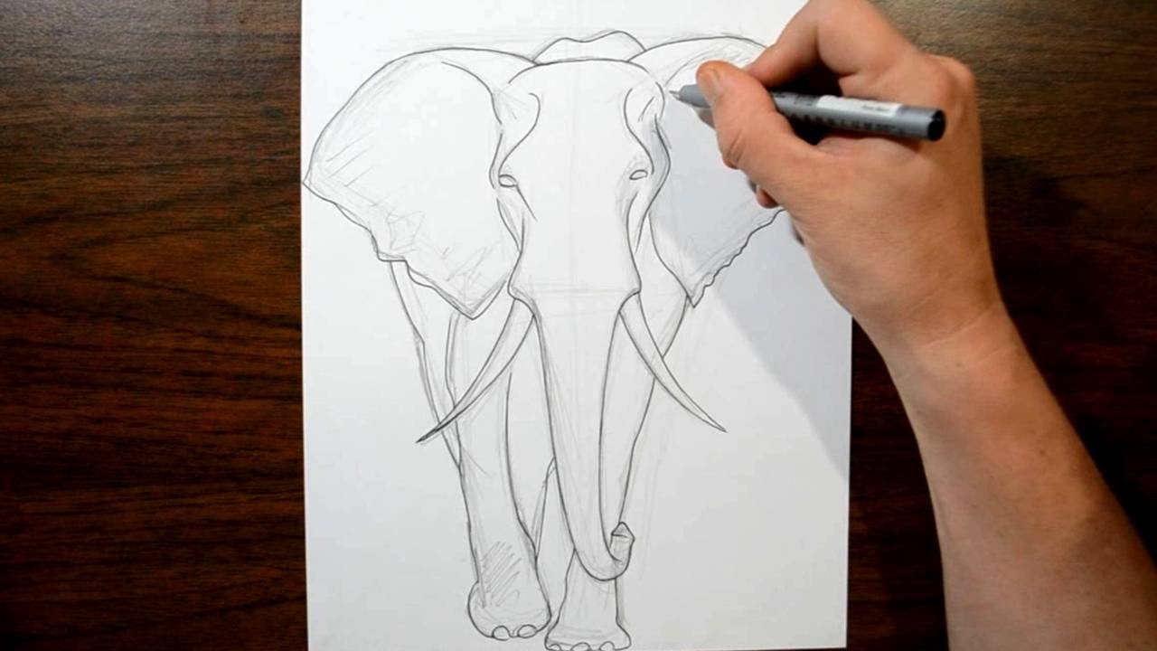 how to draw an elephant front view youtube