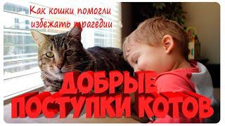 Добрые поступки котов