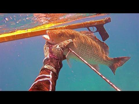 Spearfishing Florida Keys - Tavernier - Mangos, Grouper, Mutton - July 1, 2016