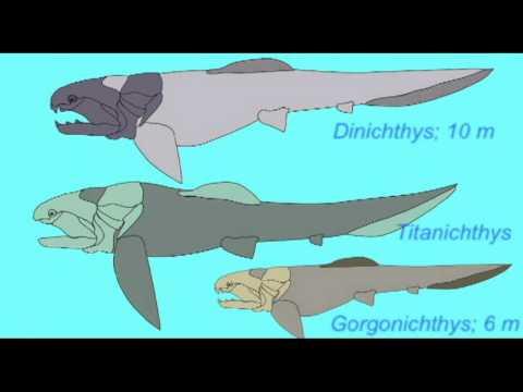 PL1: FOSSIL FISH: PLACODERM SKELETON