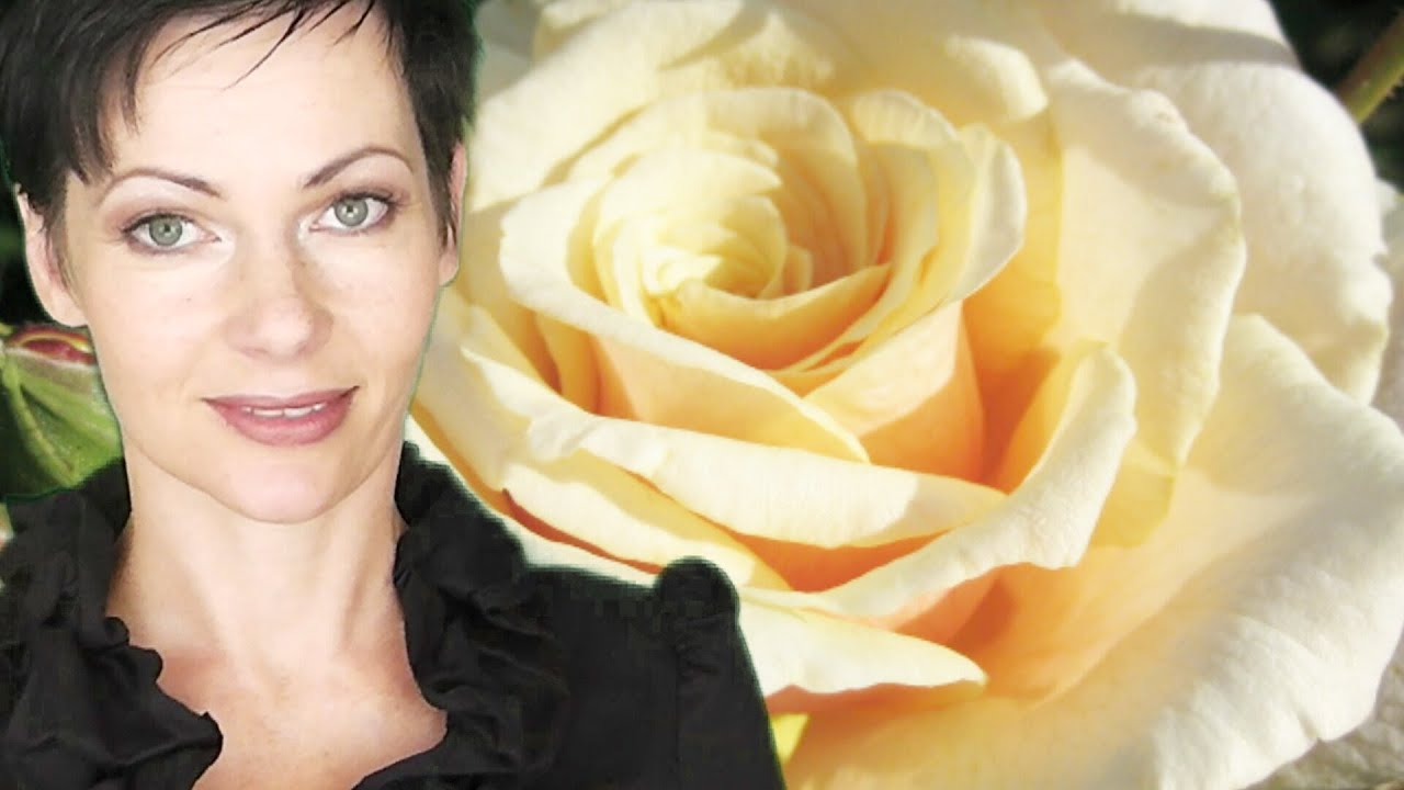 rosen online