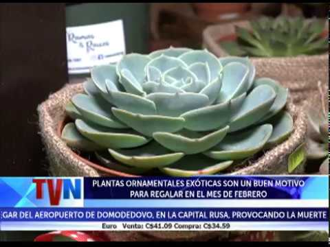 Plantas ornamentales ex ticas son un buen motivo para for Plantas medicinales y ornamentales