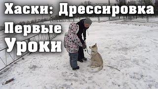 Хаски Лучшая Собака в Мире. Дрессировка. Первые Уроки